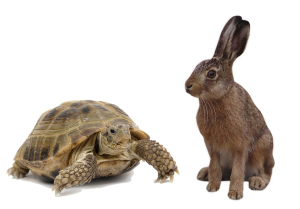 tortoise and the hare. being the tortoise may be helpful in weight loss