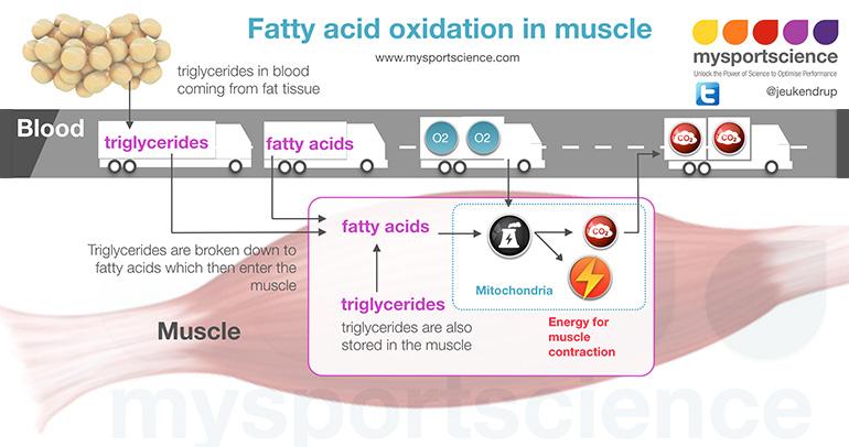hiit-mitochondria-exercise.jpg